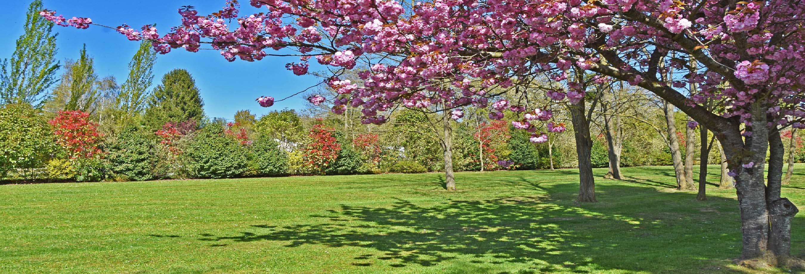 Entretien for Contrat entretien jardin